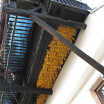 Where else would you hang your sweetcorn?
