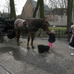 Looking after the horses