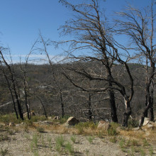 Signs of recent forest fire that narrowly missed the monastery