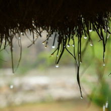 A thatched roof comes in handy when it rains