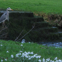 Heron looking out for lunch