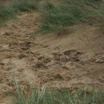 Who can resist playing in the dunes