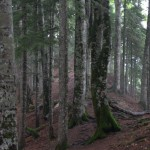 The stupendous natural forest. I love it